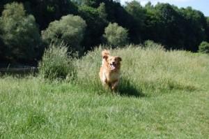 Bacardi, unser Hund